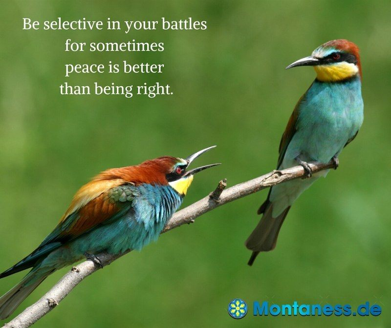 303-Be selective in your battles