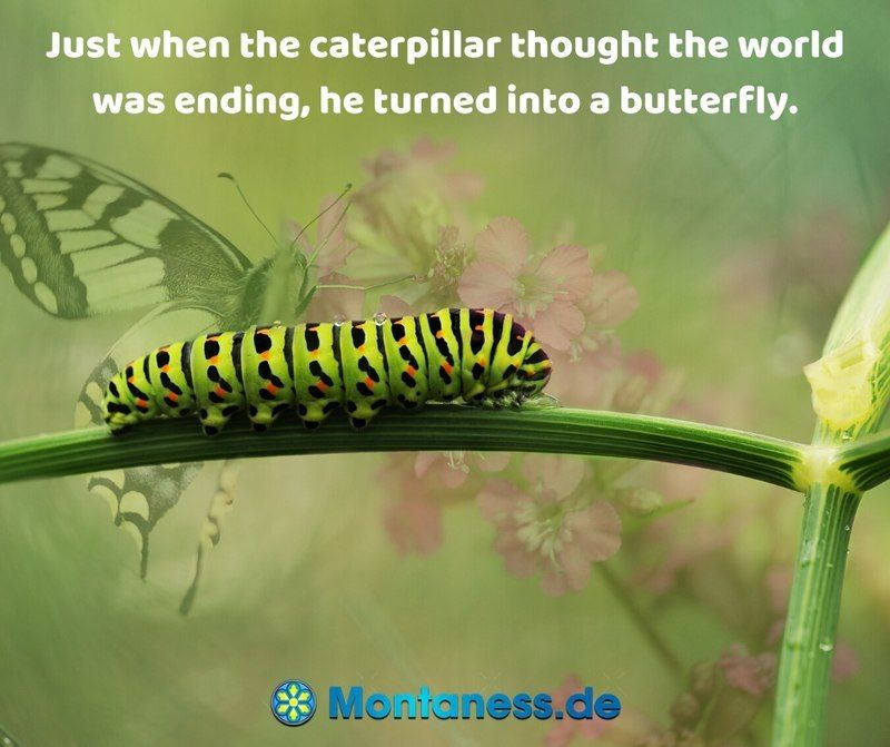 313-Just when the caterpillar thought