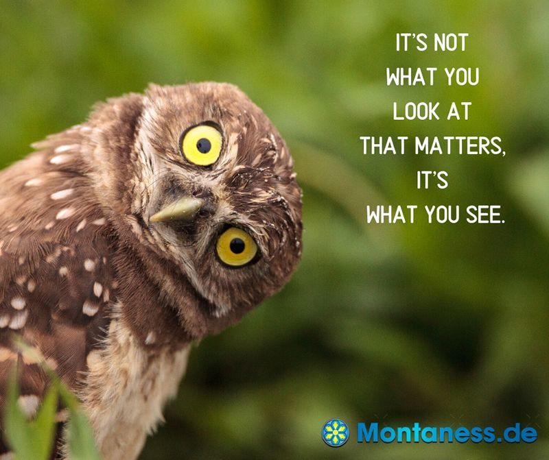 325-Its not what you look at that matters